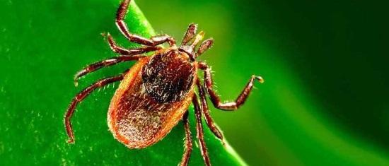 Flea and Tick Pest Control Services